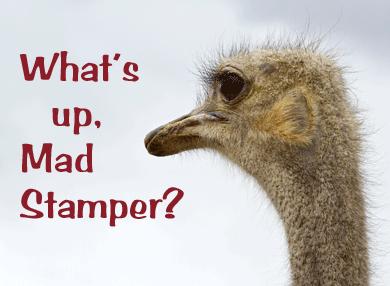 What's-Up-Australian-Ostrich-48898664