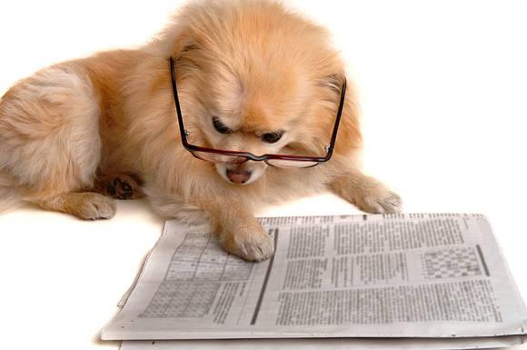 Dog_Reads_Newspaper_339224
